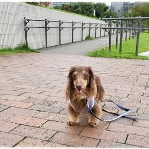 お散歩タイム♪