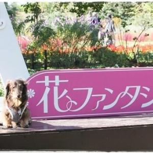 花ファンタジア