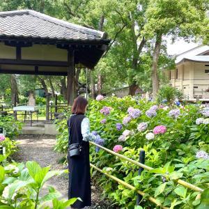ずっと気になっていたワンピースcoordinate♪×京都の紫陽花