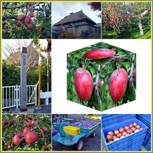 杉山屋敷跡のリンゴ園