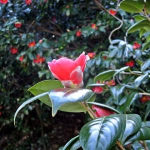 夏泊半島に咲く春の花々