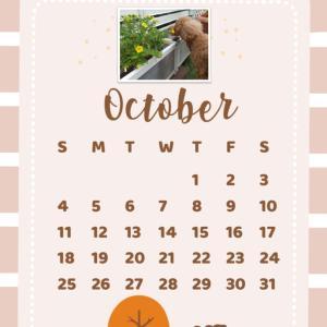 10月のお題一覧☆おうちの美化委員