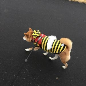 梅にミツバチ