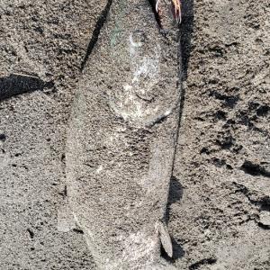 鮭釣り 2