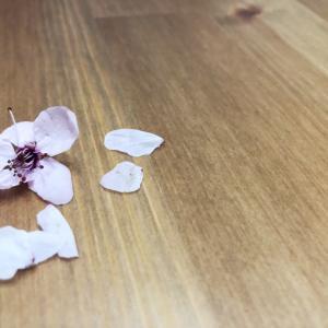 桜をみるとおセンチになる。長女の親友。