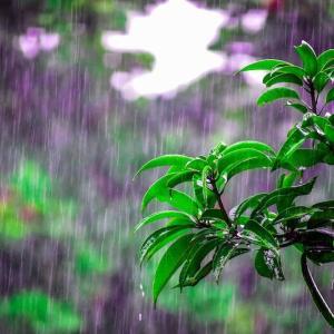 #2840 五月雨のつづける年のながめには ・・・他一首