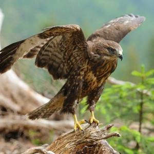 #2841 あはせつる木ゐのはし鷹をきとらし ・・・他俳句