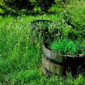 #2851 露すがる庭のたまざさうち靡き ・・・他俳句