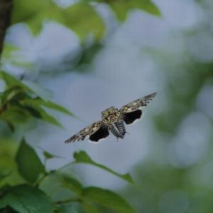 #3218 一重なる蝉の羽衣夏はなほ・・・他俳句