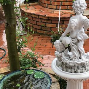 雨の庭 〜ハス、バラ、アジサイ〜