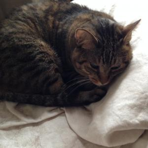 また逢えたね。トリアゾラム|特発性過眠症と猫と