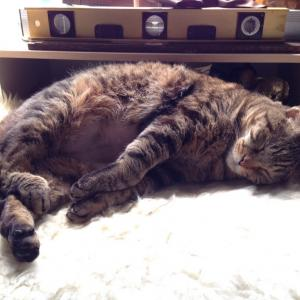 ガン検診で引っかかった肺の再検に行った|特発性過眠症と猫と