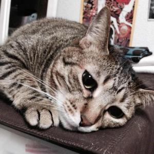 先週末の誕生日や過眠のこと|特発性過眠症と猫と