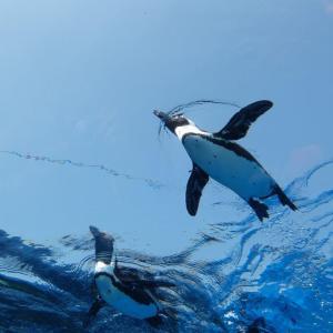 東池袋にあるサンシャイン水族館の空飛ぶペンギンの「過去写真」整理。おうちで過ごそう