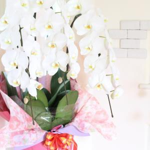 お部屋が一気に華やぐ!お花のプレゼント♪