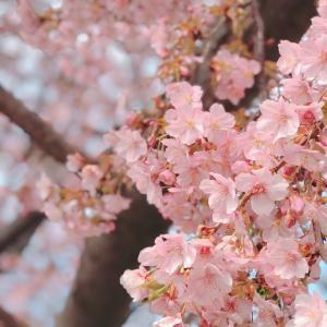 毎年の楽しみ♡一足早い春の便り
