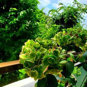 六月の緑に 想い溢れて【♪Emerald♪】