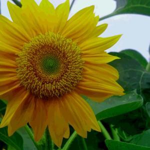 Yellow in Gray &【♪Amanogawa♪】