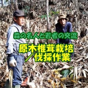 こだわりの仏生寺椎茸/原木栽培方法(伐採10月下旬)