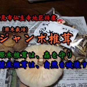 原木椎茸を森を守る・肉厚・濃厚ジャンボしいたけ/仏生寺しいたけ園