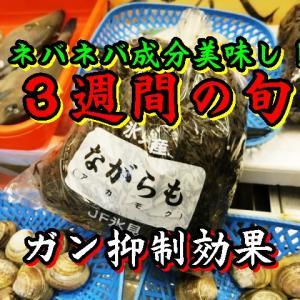 ナガラモ(アカモク)/美容と健康の海藻/氷見のお魚屋さん