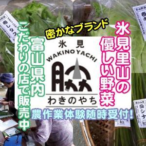 新たなブランド!美味しい氷見の里山野菜を食べてみませんか!(^^)!・春編