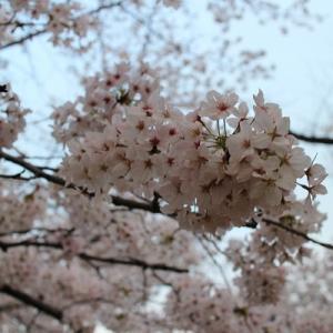 桜と春の味覚♪