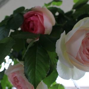 バラの季節も終わりに♪