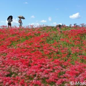 9年ぶりの日本の秋