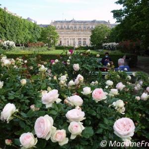 バラ咲き誇る パレ・ロワイヤル庭園