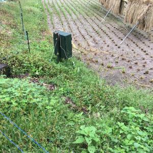 お米作り・畦の草刈り