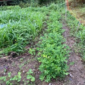 昨日は、午後から草取りと草刈りを。