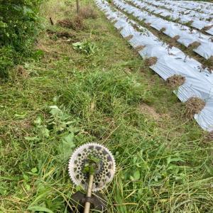 畑の草刈り&里芋の所の草取り