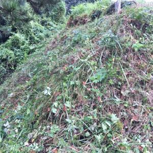 家の前の急斜面の草刈り