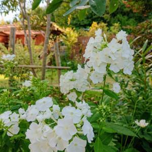 秋の朝の庭~