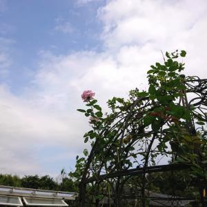 高嶺の花~