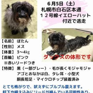 """吉報あり!""""見つかりました!札幌市白石区で探していた黒い小型犬の迷い犬"""""""
