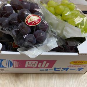 岡山の果物をいただきました😄