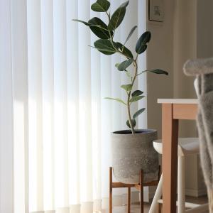 お家時間に癒しを。インテリアを楽しむ!新入り観葉植物と鉢カバー。