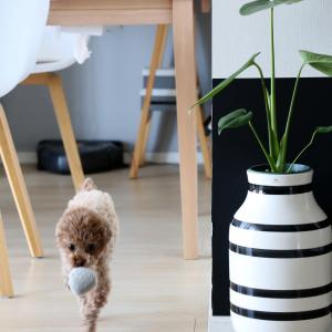 在宅時のストレスを軽減!?手軽に取り入れられる観葉植物。