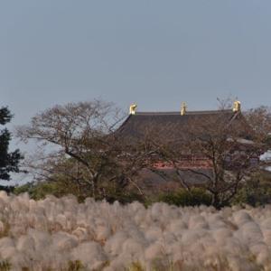 ススキの大群生が素敵な 秋の平城宮跡