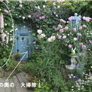 超狭~い庭奥の冬掃除&樹木の組み換え