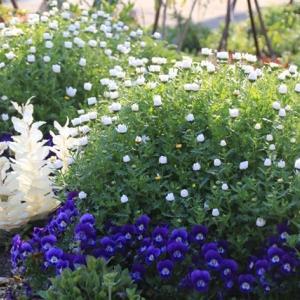 3月下旬の ローコストでローメンテナンスな花壇