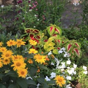 7月の ローコストでローメンテナンスな花壇