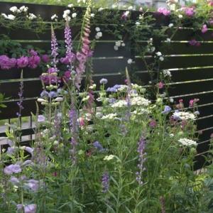 涼しくなると 懲りずに花壇のリノベーション