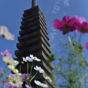 日本最古のコスモスの名所「般若寺」へ・・・小さな花旅