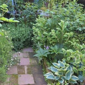 日陰の宿根草花壇も 年一度はお世話が必要ですね!