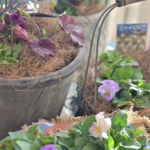 ❝春を待つ寄せ植え❞作りで 気分アップ⤴