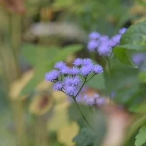 7月下旬の 庭の花々