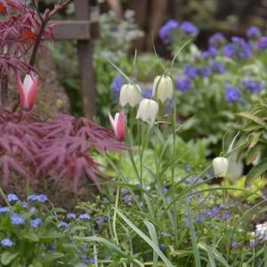 春を楽しむ花壇への プチリフォーム